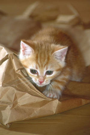 kittenwithpaperbag.jpg